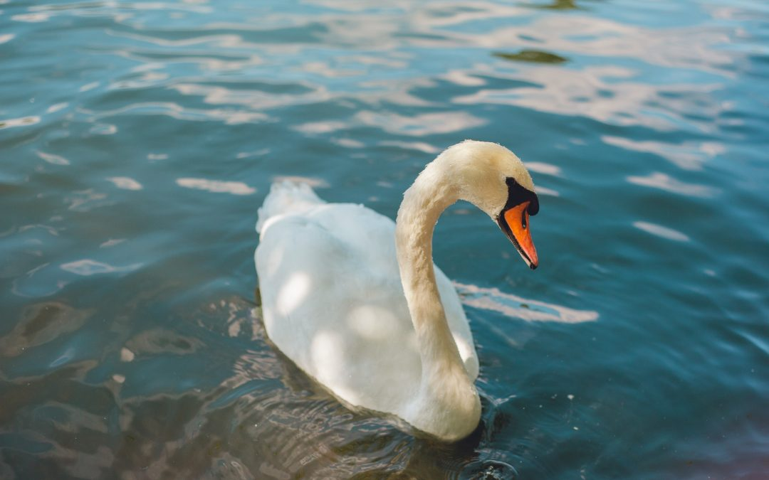The importance of keeping the River Thames clean